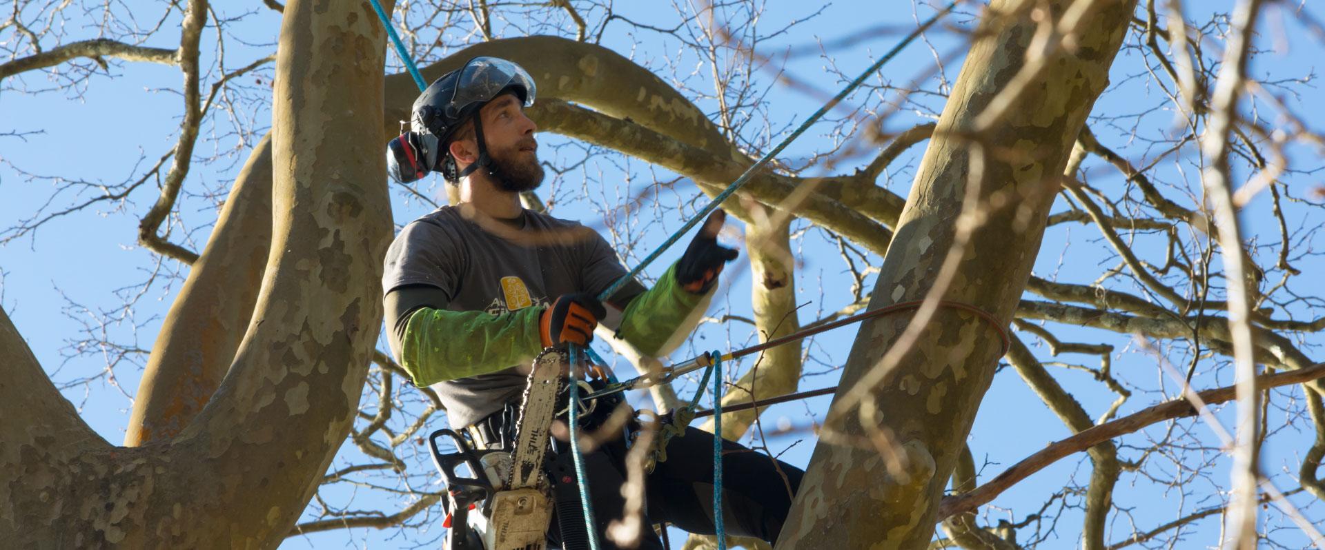 Au fil des arbres, élagage des arbres 67