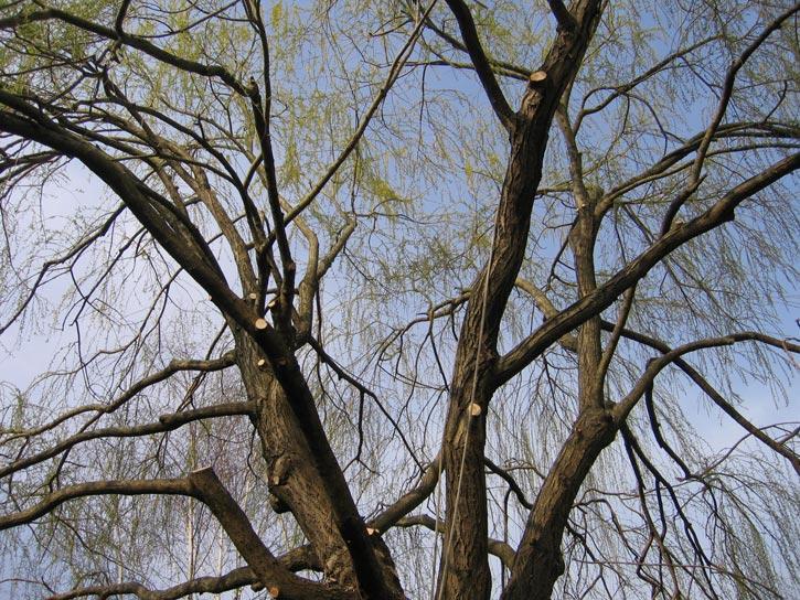 Au fil des arbres taille des arbres au pays basque et sud for Entretien jardin landes