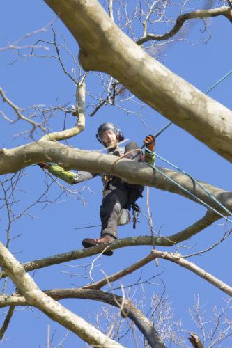 Au fil des arbres, élagage des arbres 61