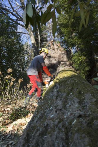 Au fil des arbres, élagage des arbres 60