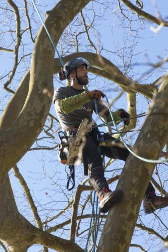 Au fil des arbres, élagage des arbres 59
