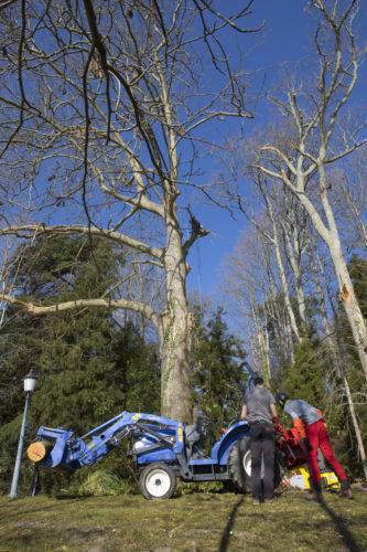 Au fil des arbres, taille des arbres 52