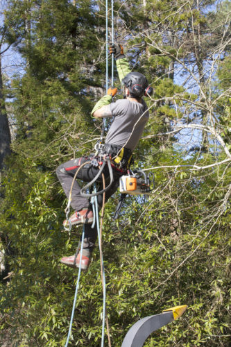 Au fil des arbres, taille des arbres 50