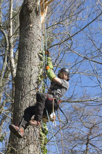 Au fil des arbres, taille des arbres 49
