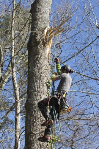 Au fil des arbres, entretien parcs et jardins 47