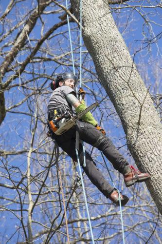 Au fil des arbres, élagage des arbres 63