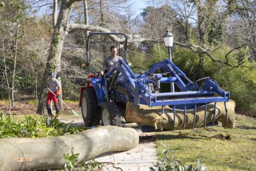 Au fil des arbres, taille des arbres pays basque 25