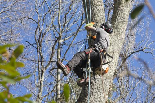 Au fil des arbres, taille des arbres pays basque 19