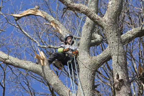 Au fil des arbres, taille des arbres pays basque 27
