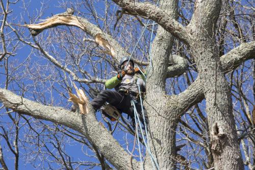 Au fil des arbres, taille des arbres pays basque 26