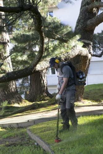 Au fil des arbres, entretien parcs et jardins 38