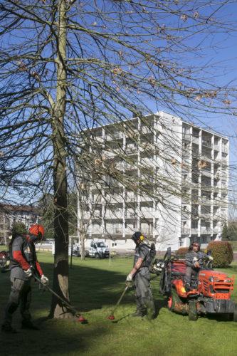 Au fil des arbres, entretien parcs et jardins 37