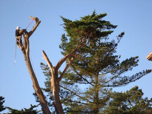 Au fil des arbres, taille des arbres pays basque 10