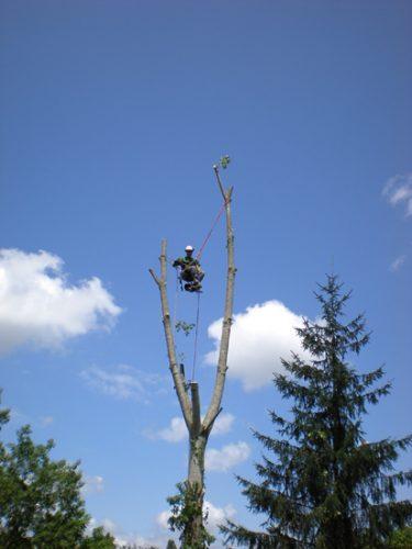 Au fil des arbres, taille des arbres pays basque 12
