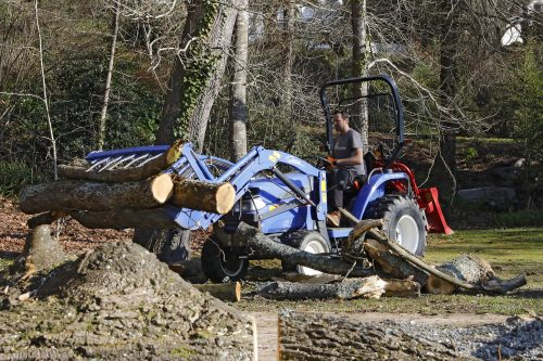 Au fil des arbres, élagage des arbres au pays basque 8