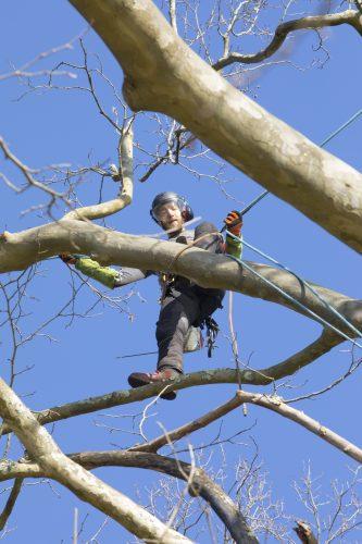 Au fil des arbres, taille des arbres pays basque 17