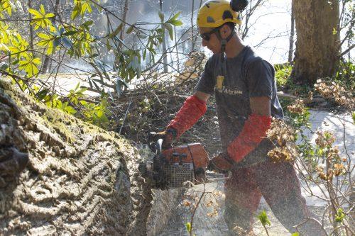 Au fil des arbres, taille des arbres pays basque 16
