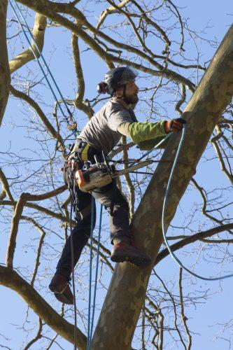 Au fil des arbres, taille des arbres pays basque 15
