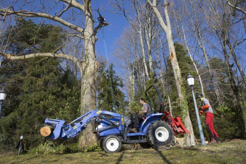 Au fil des arbres, élagage des arbres au pays basque 6