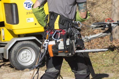 Au fil des arbres, élagage des arbres au pays basque 5